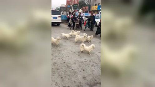 狗子大队即将到达,气势不能输,路人全都是懵的!