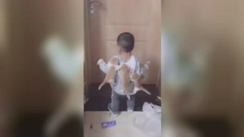 多只猫仔趴男童衣服上不下来 网友:该洗澡了都长猫了