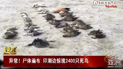 异常!尸体遍布 印湖边惊现2400只死鸟