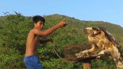 """小孩太勇敢,""""徒手""""抓老鹰,每个动作都拍手叫好!"""