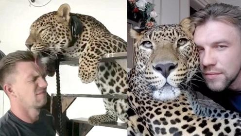 美洲豹在饲养员离职后伤心得不吃不喝,最后无奈把它带回家