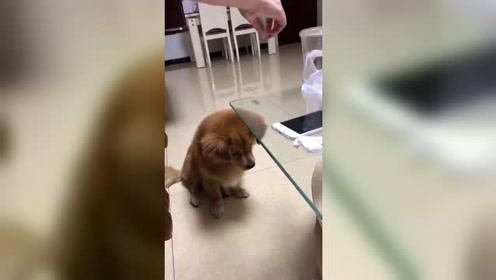 这狗子看起来不太聪明的样子