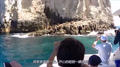老外开游艇游玩,结果被海豹纠缠,还赖着不走了