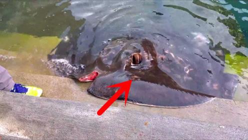 男子意外钓到罕见大鱼,长相奇特,吓得赶紧放了回去!