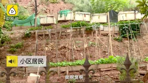老人爬梯翻围栏种菜,小区居民投诉被臭哭!
