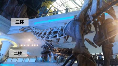 巨型恐龙有多大?在骨架面前近距离实拍带你感受下