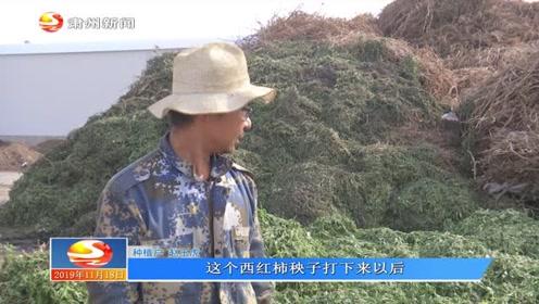 农业废弃物变废为宝 绿色产业实现生态循环001
