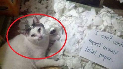 """男子把房间铺满卫生纸,然后把猫咪放了进来,下一秒猫咪""""疯""""了!"""