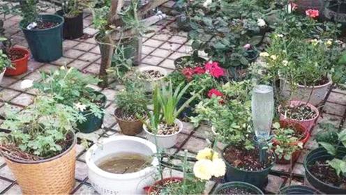 家里不能养的花,这4类植物,白送都不要,对家人危害很大不要养