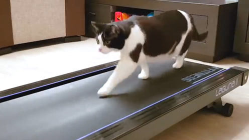男子将猫咪放到跑步机上,下一秒喵星人的举动,简直让人哭笑不得了