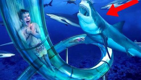 小胆不敢玩的水上滑梯,下滑瞬间被鲨鱼包围,真怕它啃破玻璃!