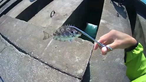 黑吉钓,石斑鱼,石狗公鱼,河豚鱼,臭肚鱼,这种洞里适合藏鱼