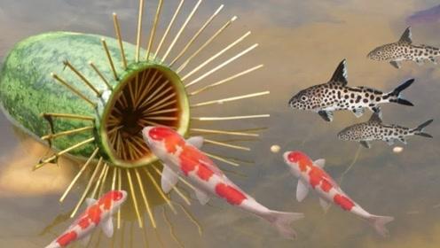 西瓜皮你们是不是直接就扔掉了 这样处理可以捉到好多鱼