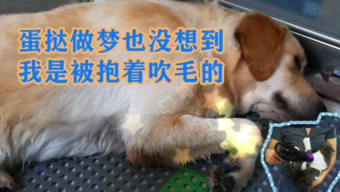 女主人给猫狗洗澡,狗睡着了几次,猫全程葛优瘫,还要抱抱举高高