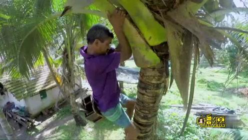 三分钟上到30米的椰树 30米高空自由行走 椰树岛上爬树人的艰辛