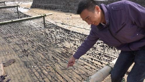 阿烽去中国紫菜第一村,揭露紫菜的秘密,还找鸭肉西施炖紫菜