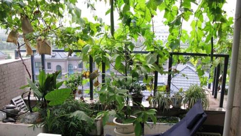 美国人在屋顶办农庄,中国人在阳台种菜,城市里发展农业划算吗?