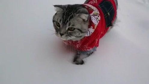 第一次见到大雪的猫咪,在雪地里来回穿行,怎么和南方小伙伴差不多?