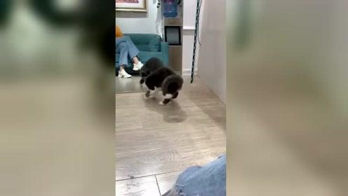 猫咪第一次看见镜子里的自己,被帅飞了!