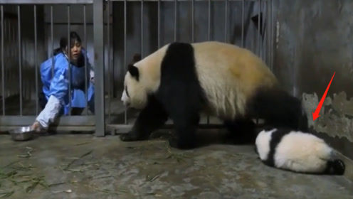 熊猫妈妈:不就吃个饭的时间,娃儿咋丢了呢?