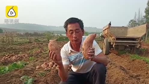 79岁老人摔断腰椎,6万斤红薯滞销邻居伸援手