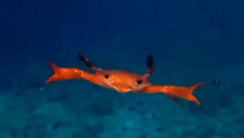 太疗愈了!日本一男子潜水偶遇螃蟹游泳 网友惊奇竟是这样游的