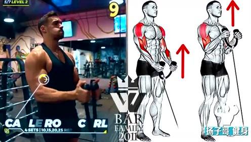 15个手臂与背部训练