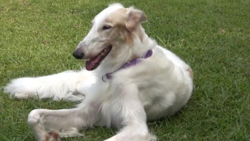 小狗因长得丑被抛弃,男子收养后,如今成了宠物界的明星!