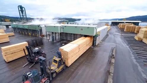 大树是如何变成木板的?丛林到工厂全程跟踪拍摄,解开多年疑惑!
