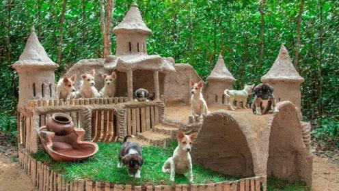 流浪狗太多,小哥十分有爱的建造了一个豪华狗屋,狗狗们很高兴