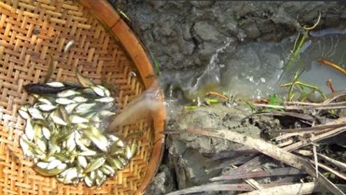小鱼们掉到了簸箕里