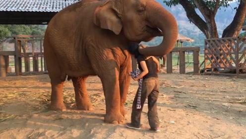 大象性格怪异,时常威胁饲养员,饲养员:我太难了
