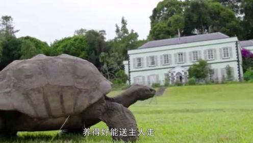 寺庙养了30年的乌龟突然死亡,剖开肚子众人震惊了,里面全是宝贝