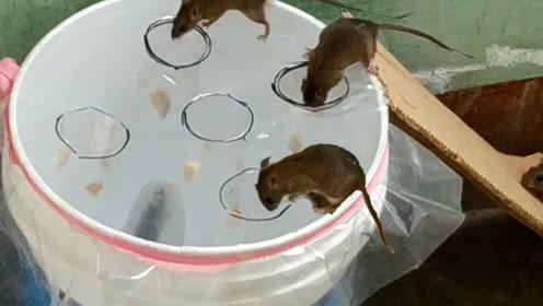 简易捕鼠器的制作,你学会了吗?