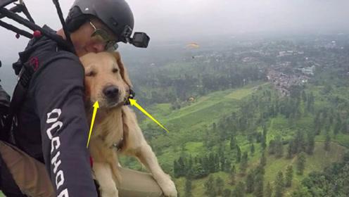 """外国牛人带狗""""跳伞"""",不料着陆后,狗狗的反应让人哭笑不得!"""