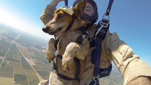 主人带狗狗跳伞,狗狗被吓到不行,着陆后的反应请大家憋住别笑