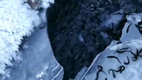 冰天雪地的一汪泉水中,怎么会有这么多的美味?