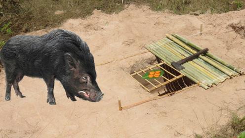 越南大叔制作花式陷阱抓野味,方法简单又实用,网友:猪儿哪里逃!