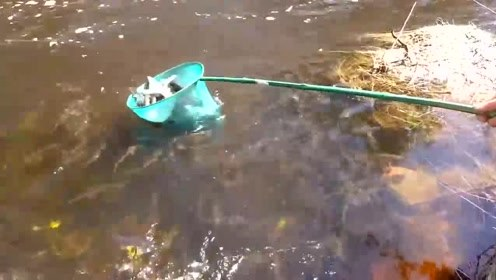 山溪这么多鱼,这下钓友们要发狂了,赶紧动手!