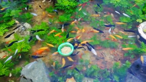 这个鱼池做得太漂亮了