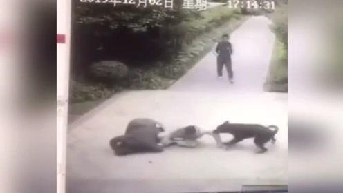 见人就咬!福州红悦小区发生烈性犬伤人事件 监控拍下可怕一幕