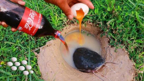 利用可乐曼妥思和鸡蛋,在河边洞里能捕鱼?怎么自己跑出来了