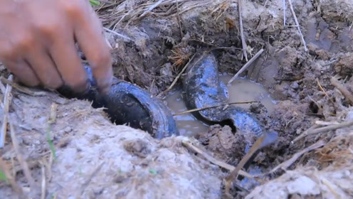 小伙在干旱田里翻土,居然挖到了大鱼,镜头记录全过程