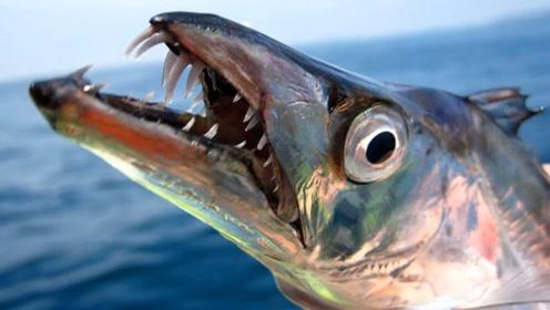 最有骨气的鱼,被打捞后立马自爆,没有人可以把它活着带回去