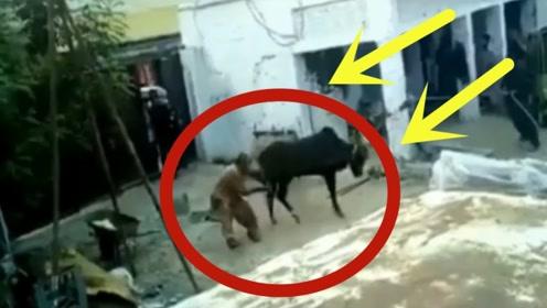 农家大院里,大黑牛临死前的挣扎,随后场面彻底无法控制!