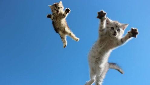 猫咪原来是一个骨骼清奇的学武奇才!身子软得像水!还爱睡觉!