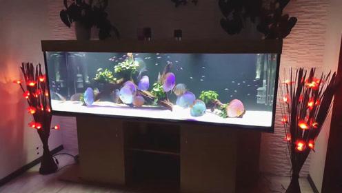 真想混养一缸这样的七彩神仙鱼,靠近一瞧,瞬间就把人吸引住了