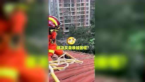 萨摩耶7楼屋顶看风景被困 被救后下一幕让人笑喷