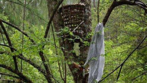 男子野外游玩,发现树上挂满婴儿尸骨,知道真相后让人吃惊!