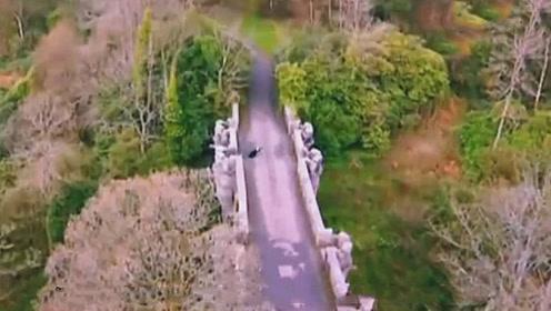 英国最神秘的一座桥,前后50多条狗在这座桥自杀,究竟是什么原因?
